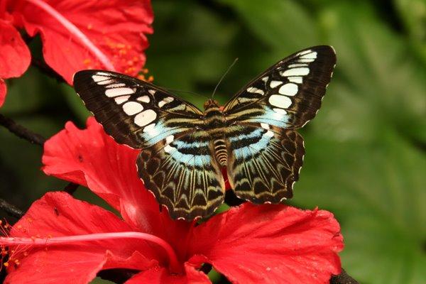 Penang Butterfly Garden